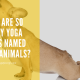 why are so many yoga poses named after animal poses